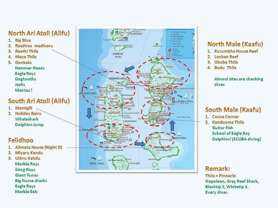 马尔代夫的海岛星罗棋布,能够看的东西实在太多啦,礁鲨群,锤头鲨图片