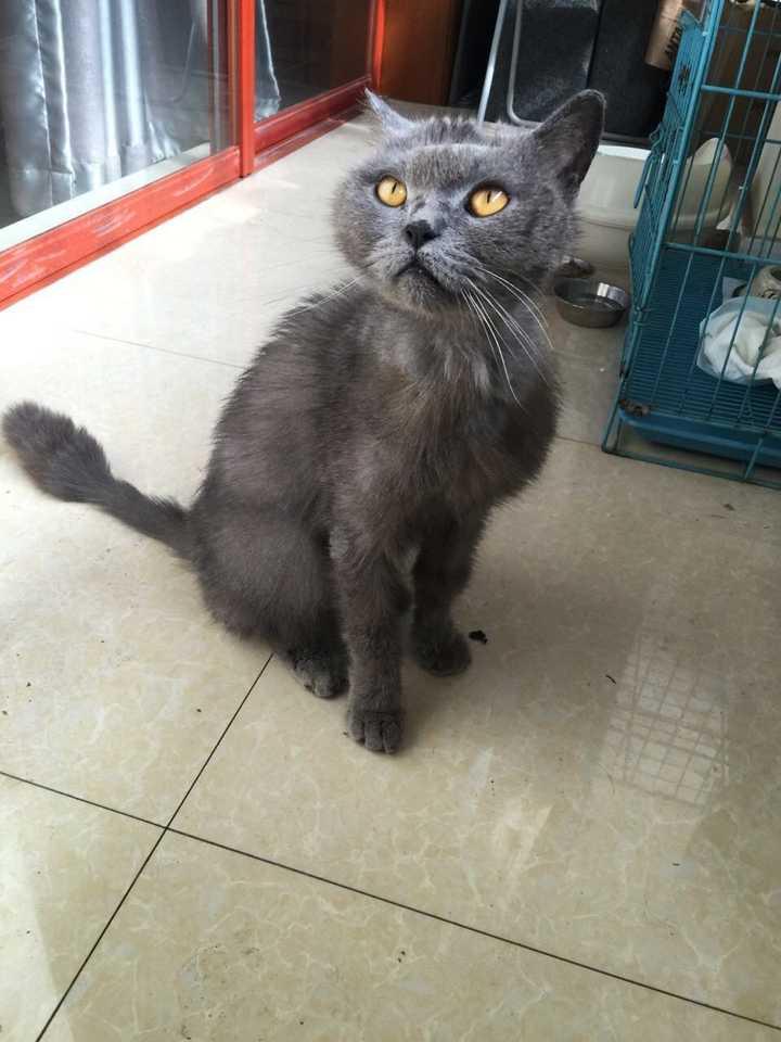 养的猫咪因为真菌皮肤病严重,兽医建议养到笼子里以防止交叉传染,猫咪