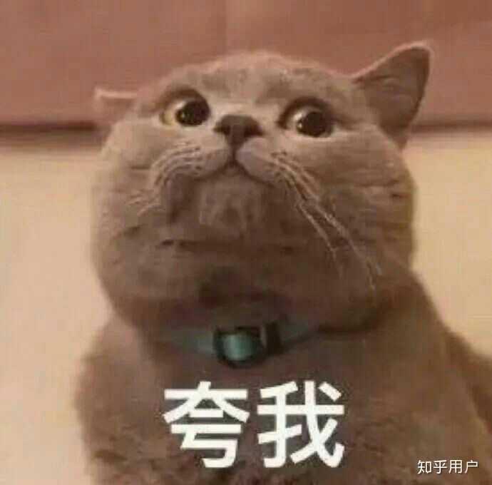 一个喜欢猫的男人_一个喜欢猫的男生会被女生怎样看待?