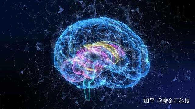 人类大脑结构异常复杂 仅仅10%的大脑开发度已经可以创造出人类世界图片