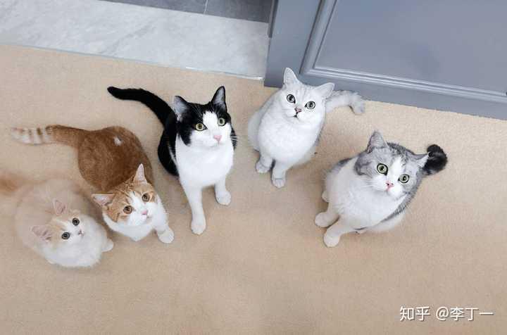 如何评价花花与三猫catlive?