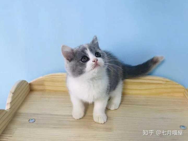 猫咪感冒发烧的症状是什么?