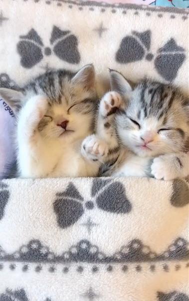 看猫片,当然不能错过a站up主花花与三猫catlive家的五只可爱猫咪啦