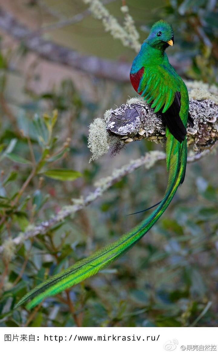 自然界有哪些漂亮的神器?捕黄鳝鸟类塑料瓶图片