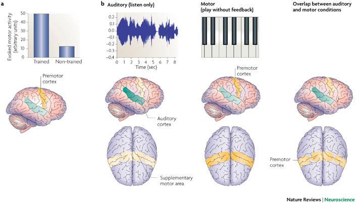 人的节奏感是怎么形成的?(转载) - 大卫 - 峰回路转