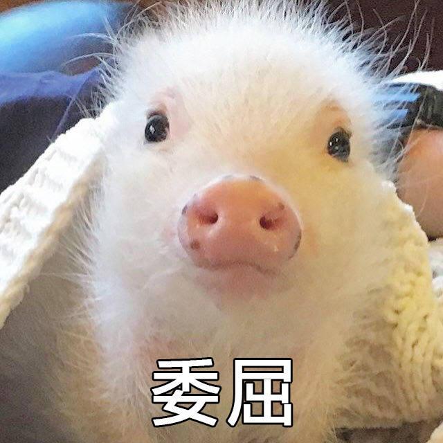 有哪些猪的搞笑图片或者表情?360表情包图片微信图片