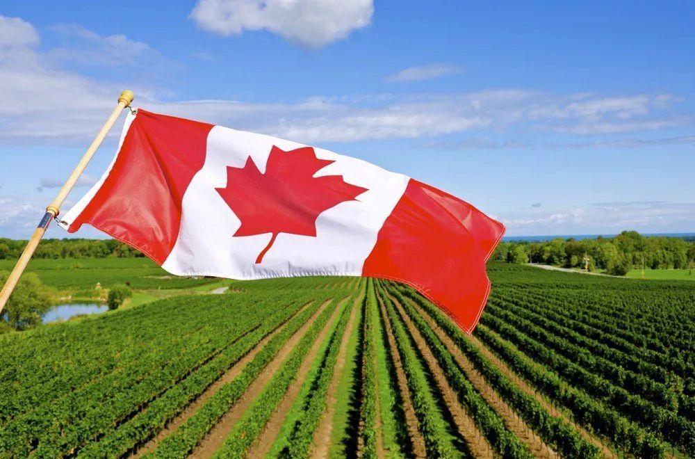 在加拿大的移民政策:什么是加拿大的移民政策是什么? ?