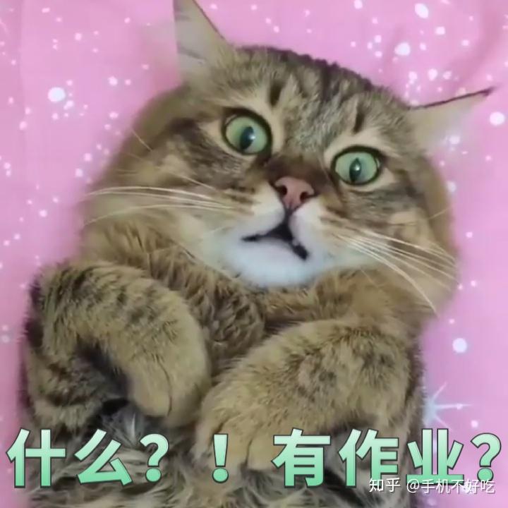 猫咪的表情包是我的开心源泉 每当有压力大失眠这一类情况的时候就会图片