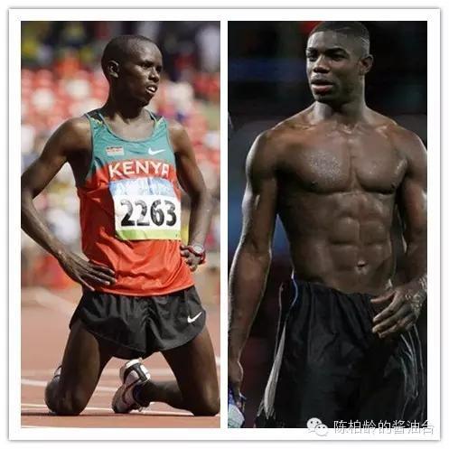 肌肉类型:快肌与慢肌