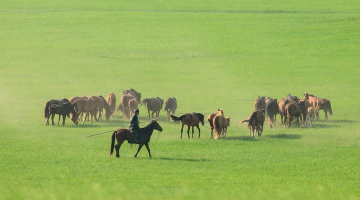 8月去哪里旅游不热 呼伦贝尔大草原等着你