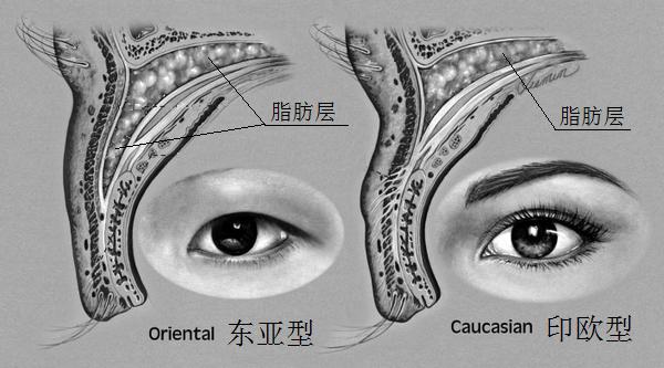 东亚人体质特征的寒带起源1 生死攸关的眼睛 -  - 宋丽娟的博客