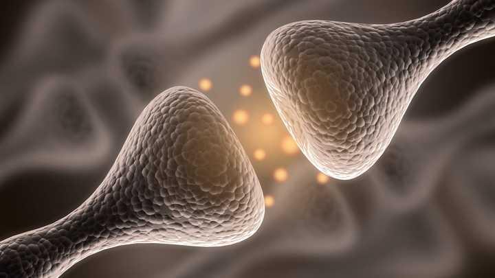 内啡肽 多巴胺和内啡肽有什么区别?