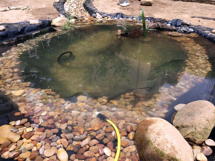 庭院建造池塘的造景过程【转自weibo:@马锐拉】插图(27)