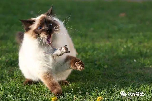 猫真的天生爱吃鱼吗?真相来了(图2)