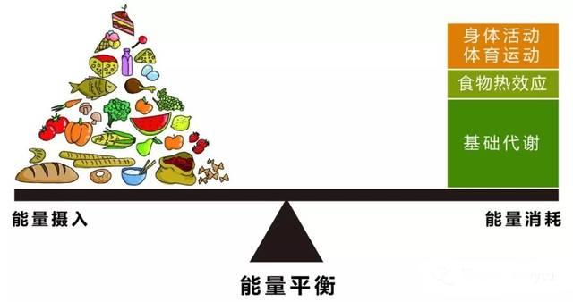 減少 体重 生理 率 的