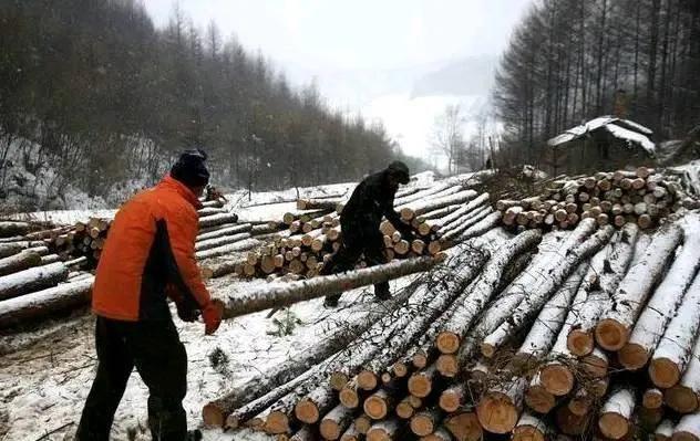 藏在农村不起眼的暴利行业有哪些(在农村做什么生意最好赚钱)