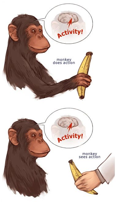 心理学史上有哪些用动物做的有趣实验?