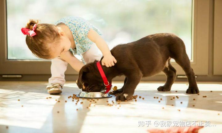 狗子每天应该吃几顿及吃什么有助于狗的成长!(图1)
