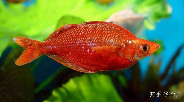 孩子问:鱼会睡觉吗?鱼会喝水吗?鱼会撒尿吗?我的回答很烧脑(图4)