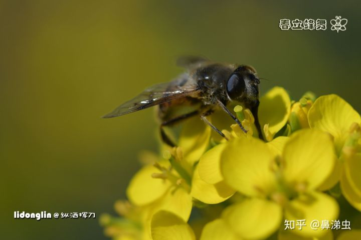 科学 会 日本 大会 秋季 咽喉 耳鼻 今年の専門医講習会 |