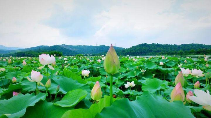 杭州在中国的哪个地方(杭州究竟有几个西湖)