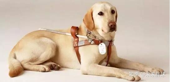 原来狗狗也有智商排行榜,来看看你家狗狗的智商高不高(图4)