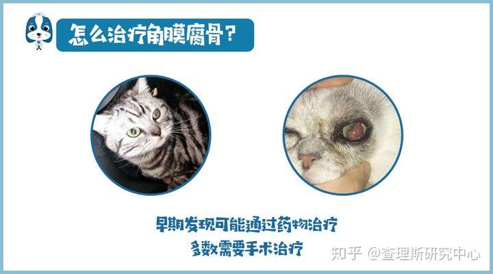 猫咪角膜腐骨(坏死性角膜炎)是什么病?怎么治疗啊?(图9)