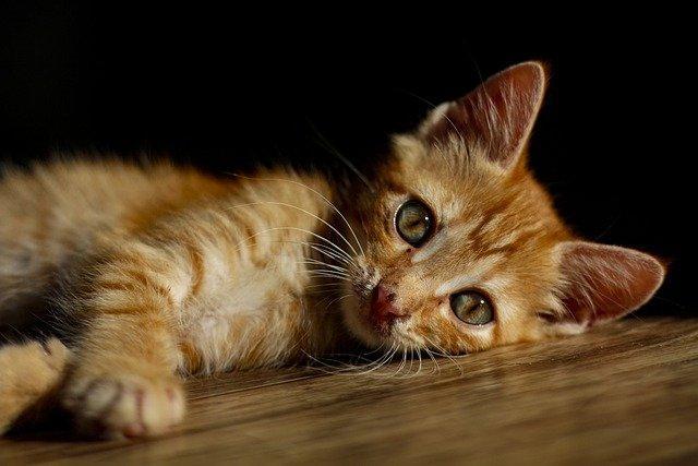 新手幼猫怎么喂怎么换粮你知道吗?
