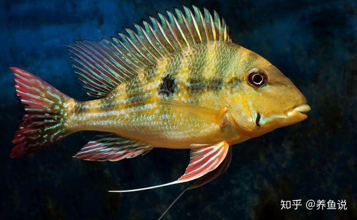 鱼缸清道夫鱼种类繁多,如何选,才能达到水清鱼靓的视觉效果?(图3)