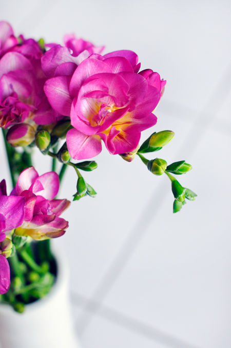 冬季花卉主力軍:郁金香、風信子、洋水仙種植|花卉知識-寧夏四季花港園藝有限公司