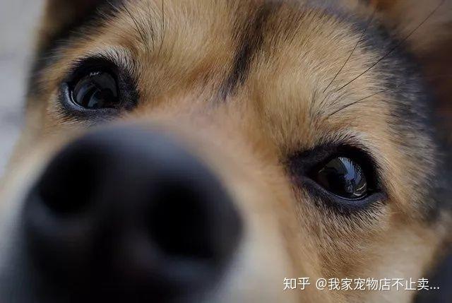 狗是色盲吗 它的视力如何呢?(图3)