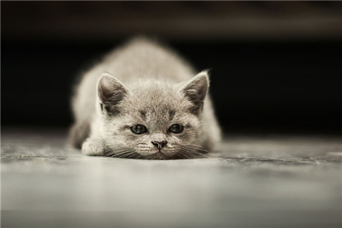 猫打喷嚏不是小事(图7)