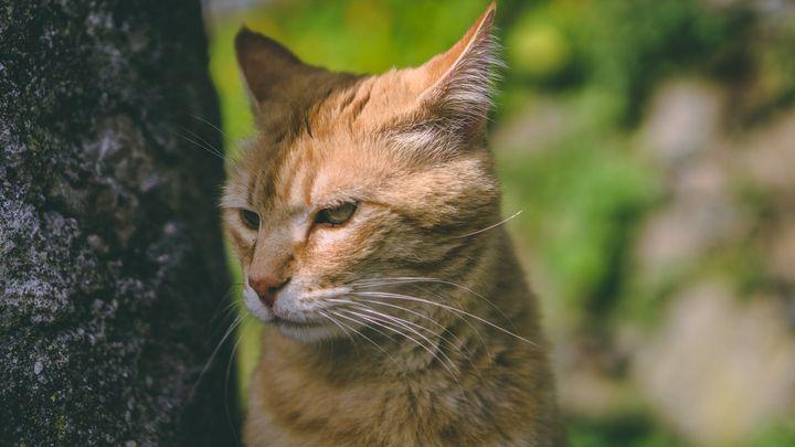 【猫咪训练】