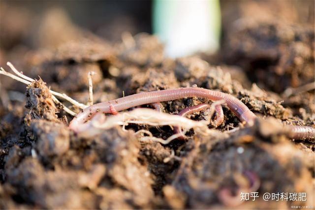 土壤修复市场到底能不能火