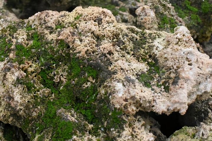 上水石种什么植物最好(上水石怎么养出苔藓)插图(3)