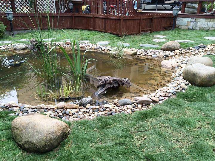 庭院建造池塘的造景过程【转自weibo:@马锐拉】插图(36)