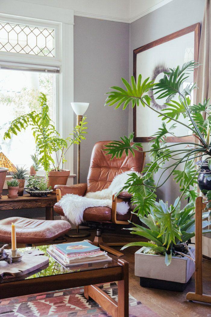 这30种外国人家常见大植物,在中国也能买到