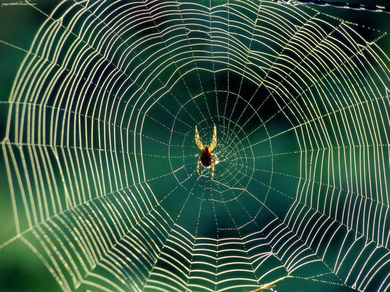 Web crawler with Python - 01.准备