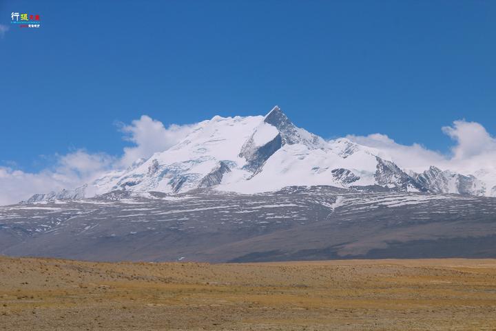 請問這是什麼植物?是在青藏高原海拔4500米左右的地方挖的?