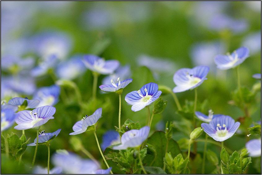【花名册】春天在维罗尼卡的眼睛里