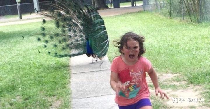 症 鳥 恐怖