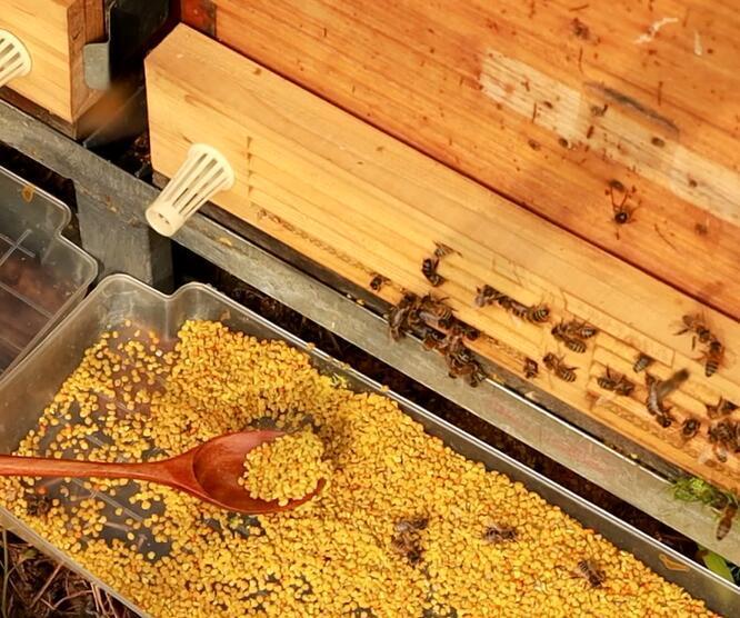 男人采取蜜蜂花粉的作用和療效?采取蜜蜂花粉的最佳方式?