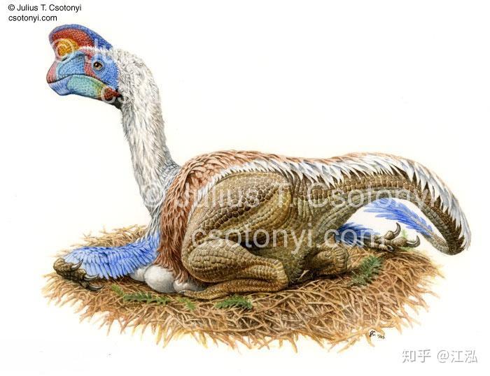 我们终于抓到了那个偷恐龙蛋的贼