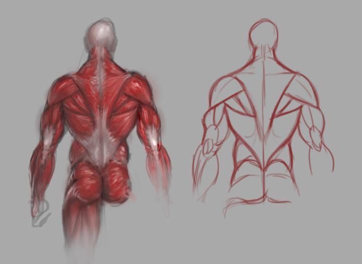 """里脊肉是哪里的肉_对,就是那些老是""""劳损""""的「腰肌」 - 知乎"""