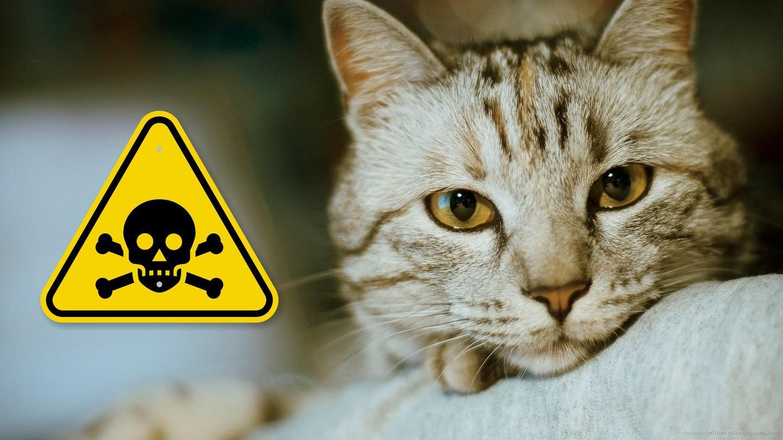 猫用消毒剂大全,如何为猫咪选择消毒液