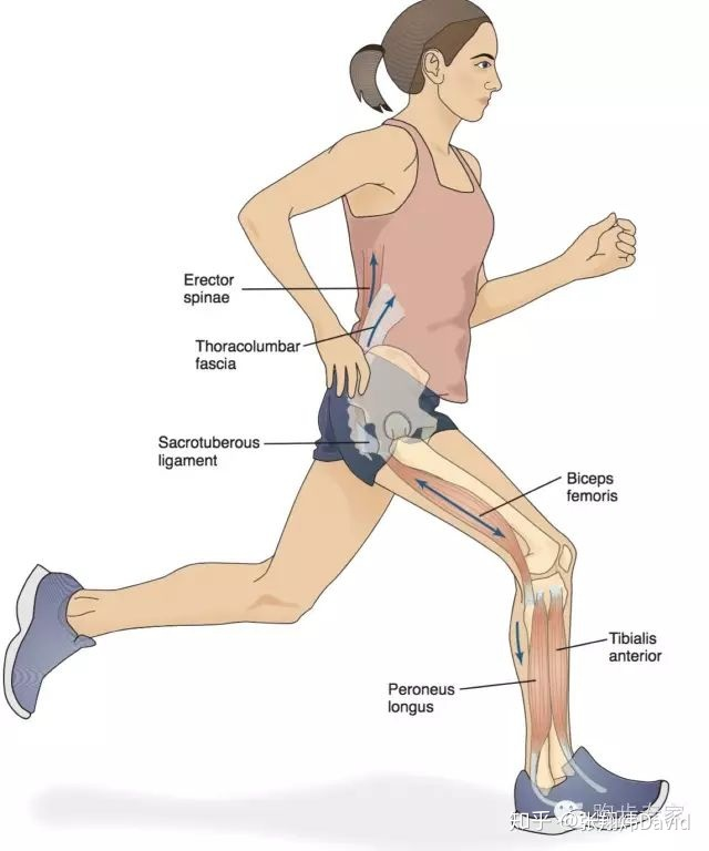 如何有效改善跑姿?