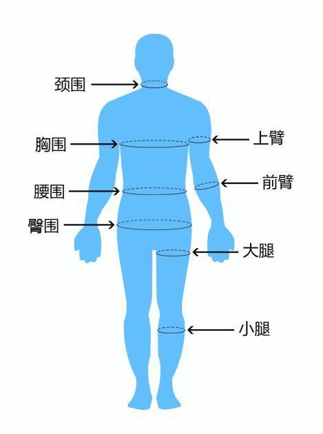 腿部肌肉示意图_体重很轻但看上去很胖怎么办? - 知乎