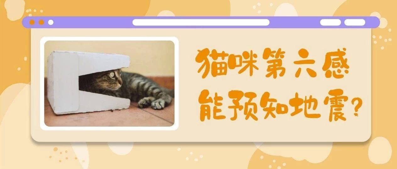 猫 地震 地震が起こる前にする猫の不思議な6つの行動