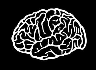 """情绪控制_杏仁核:大脑的""""恐惧中心""""丨原创 - 知乎"""