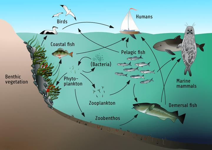 深海鱼放生的时候在肚子上戳个洞,是否有科学道理?
